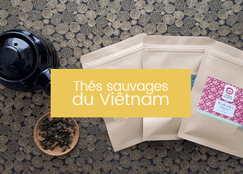 Thés sauvages du Viêtnam